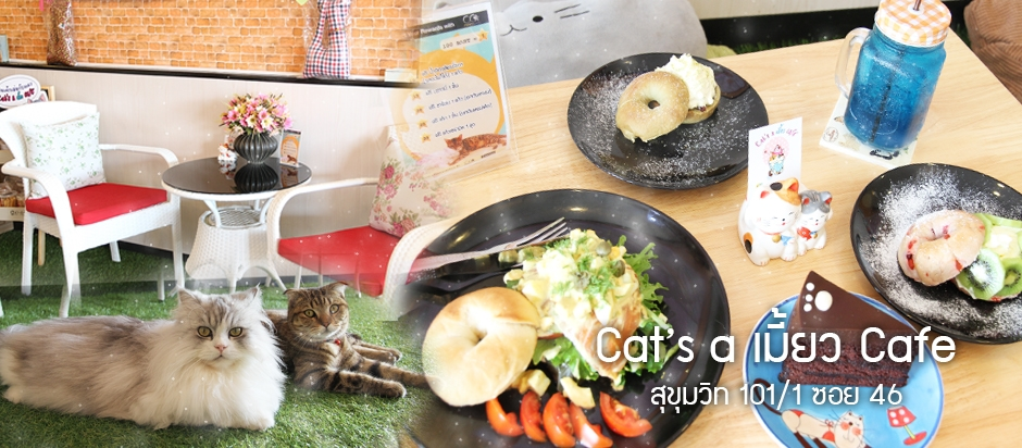 Cat a เมี้ยว Cafe